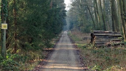 Auf diesem Waldweg wurde der Jogger angeschossen