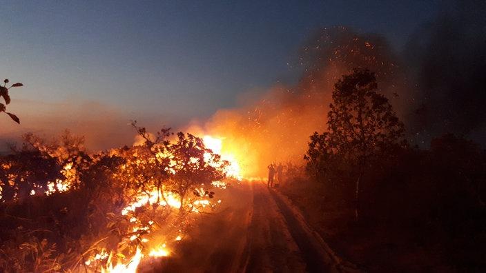 Eine Gruppe beobachtet einen Waldbrand im Naturpark Chapada dos Guimaraes.