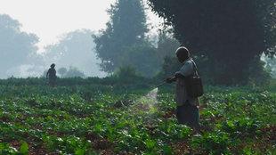 Ein indischer Farmer versprüht Pestizide auf einem Feld.