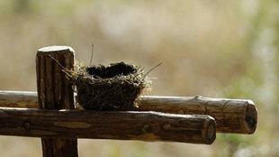 Ein leeres Vogelnest auf einem Holzstamm