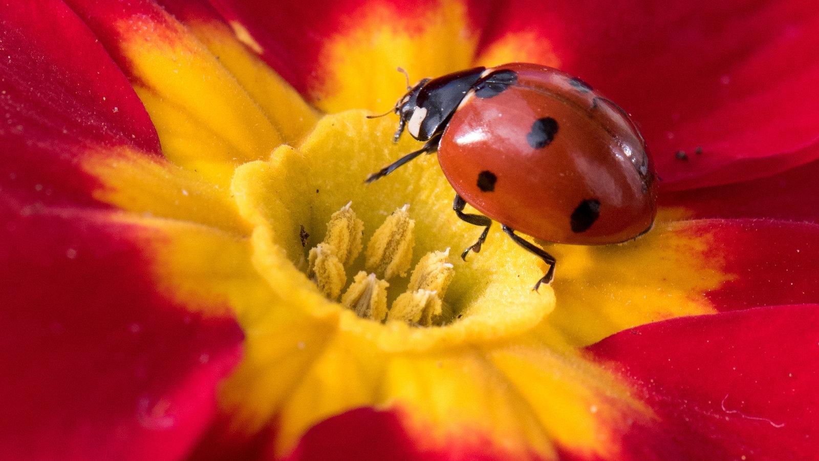 blitzmerker insekten raten sie mal hier und heute. Black Bedroom Furniture Sets. Home Design Ideas
