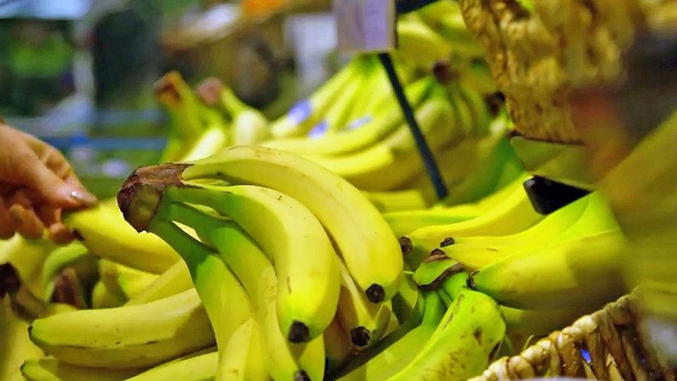 unsere banane ist bedroht natur wissen wdr. Black Bedroom Furniture Sets. Home Design Ideas