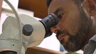 Mann am Mikroskop