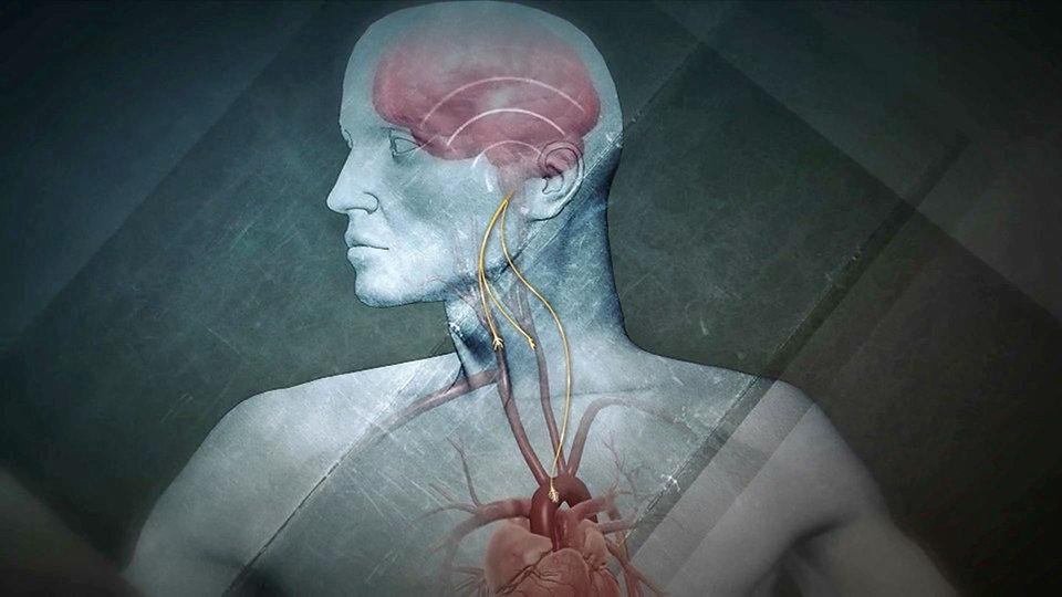 Zwischen Herz und Hirn - Quarks - Sendungen A-Z - Video - Mediathek ...