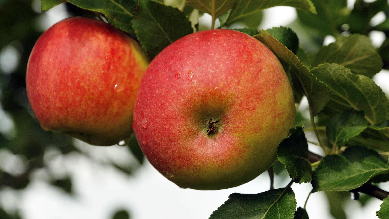 Äpfel - das gesunde Obst - Ernährung - Verbraucher - WDR