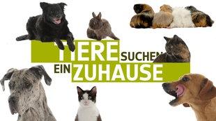 Teaserbild Alle Tiere