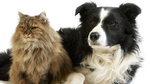Aufnahme eines Hundes und einer Katze