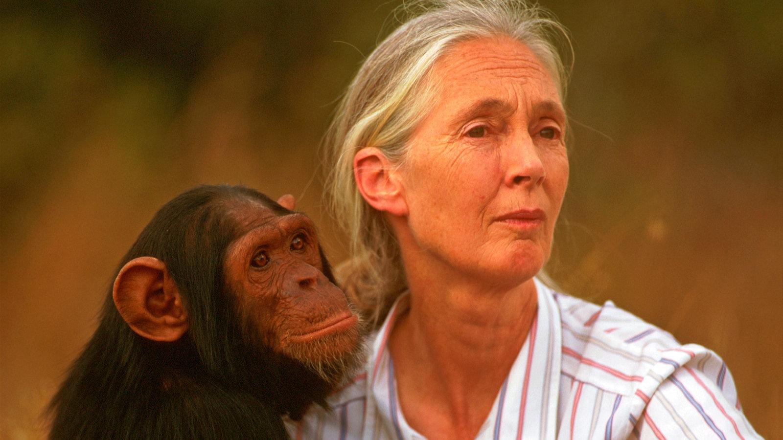 Filmkritik Jane Goodall Die Unbeirrbare Affen Foscherin Natur Wissen Wdr