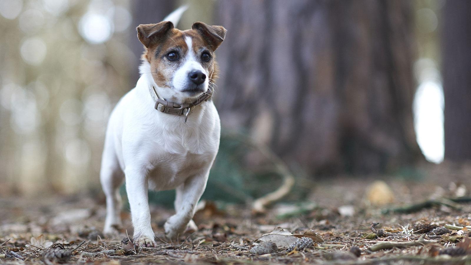Zehn Dinge Die Kleine Hunde Nicht M 246 Gen Tiere Suchen Ein Zuhause Fernsehen Wdr