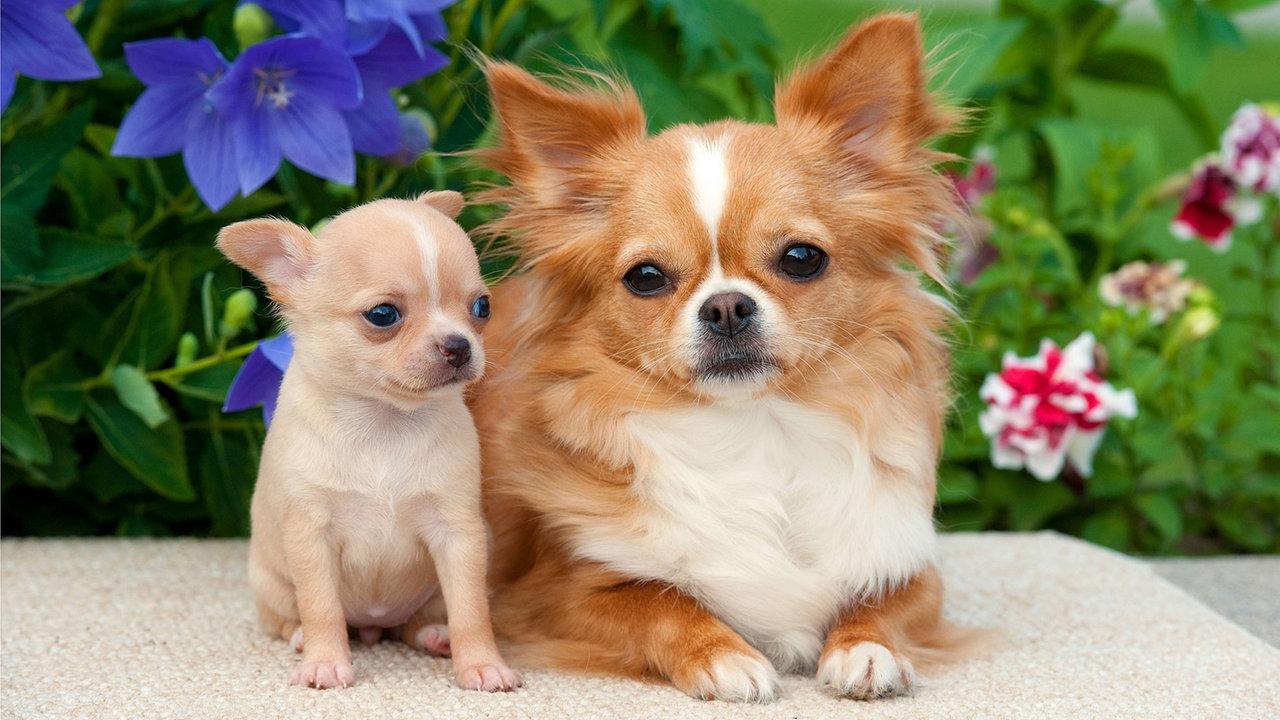 Kleine Hunde Suchen Ein Zuhause