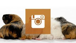 Instagram Tiere Suchen Ein Zuhause