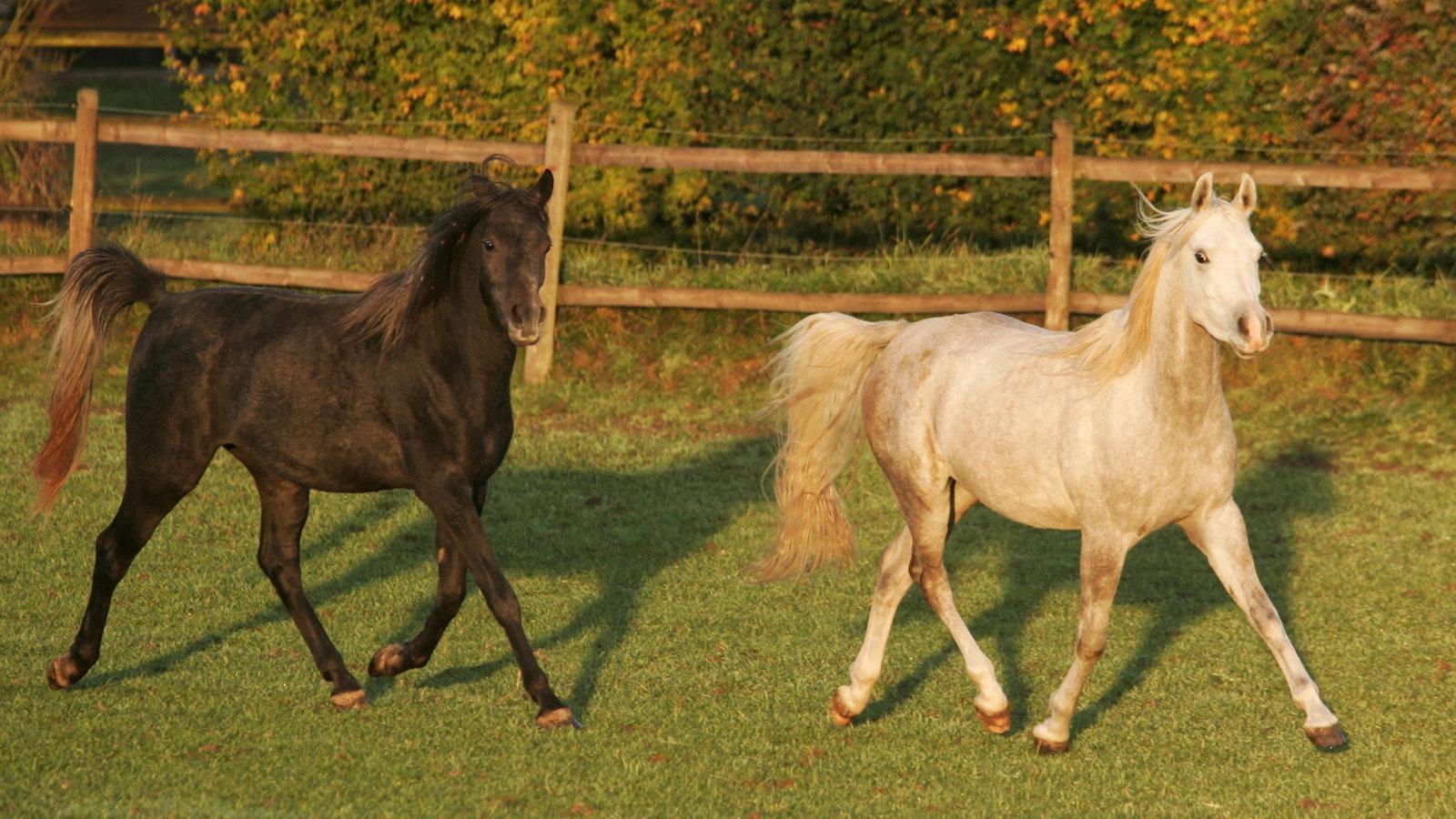 10 Dinge, die Pferde glücklich machen - Themenschwerpunkte - Tiere ...