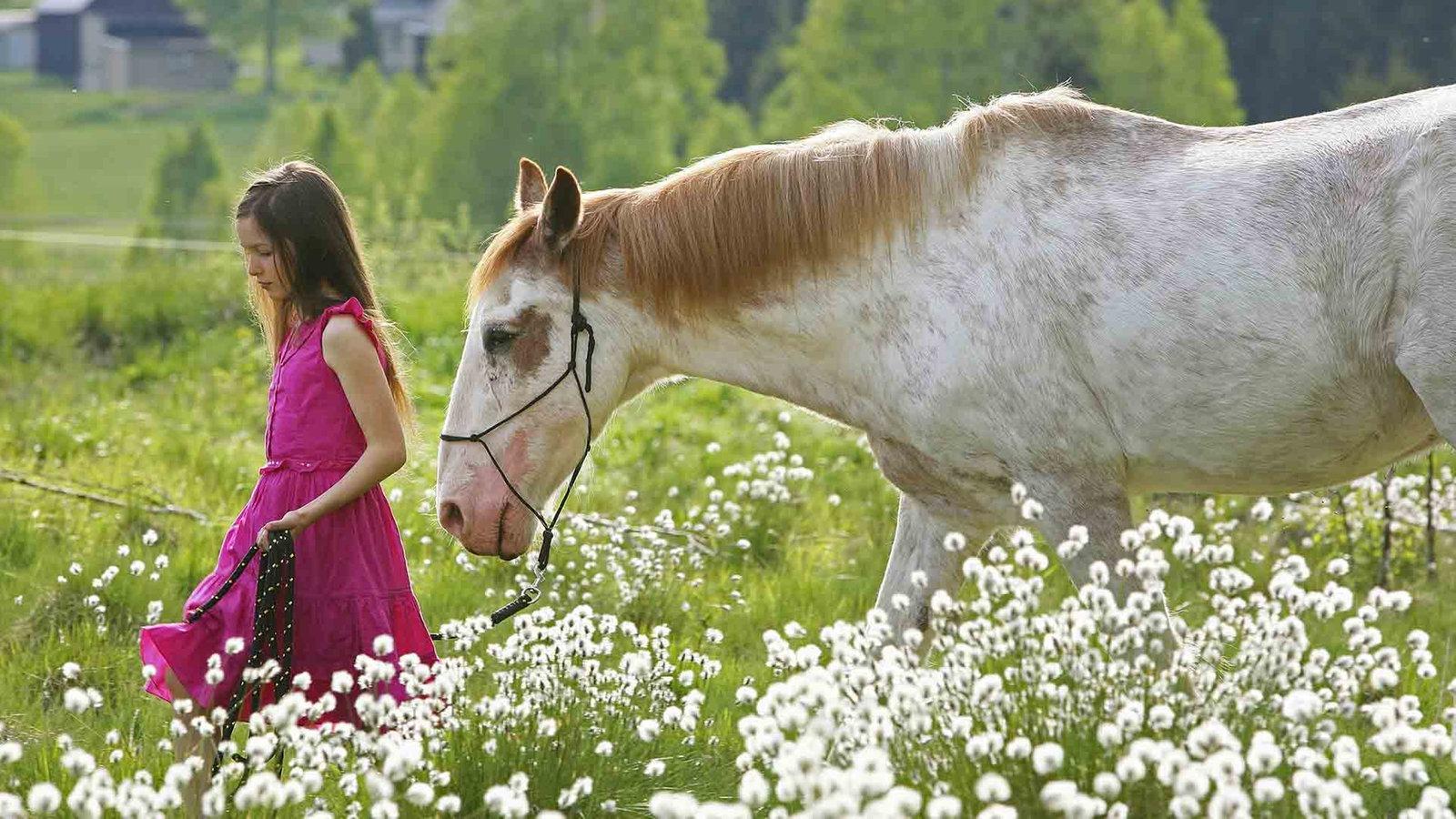Irische Pferde Suchen Ein Zuhause