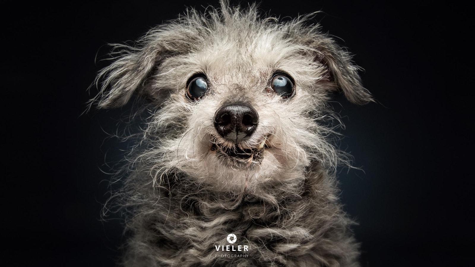 Video Tiere Suchen Ein Zuhause Sendungen A Z Video Mediathek Wdr