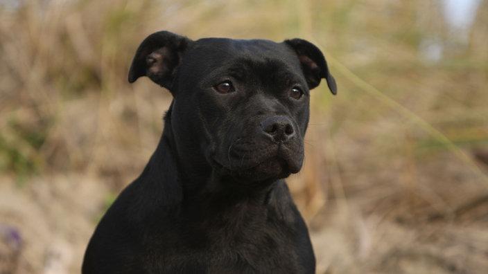 Listenhunde In Nrw Tiere Suchen Ein Zuhause Fernsehen Wdr