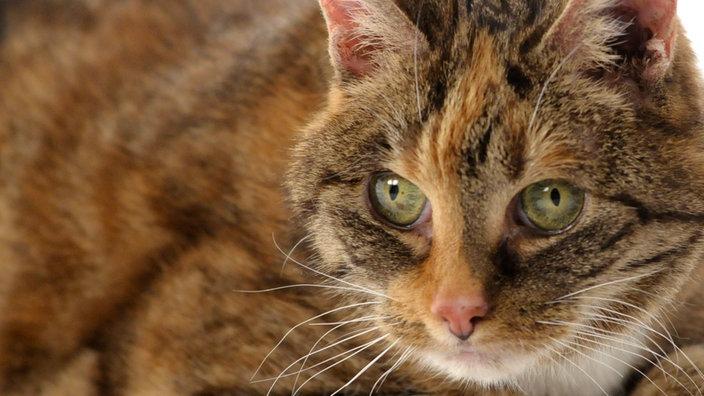Vermittlungsbilanz Tiere Suchen Ein Zuhause Fernsehen Wdr