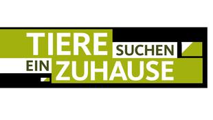 Logo Webfernseher Tiere suchen ein Zuhause