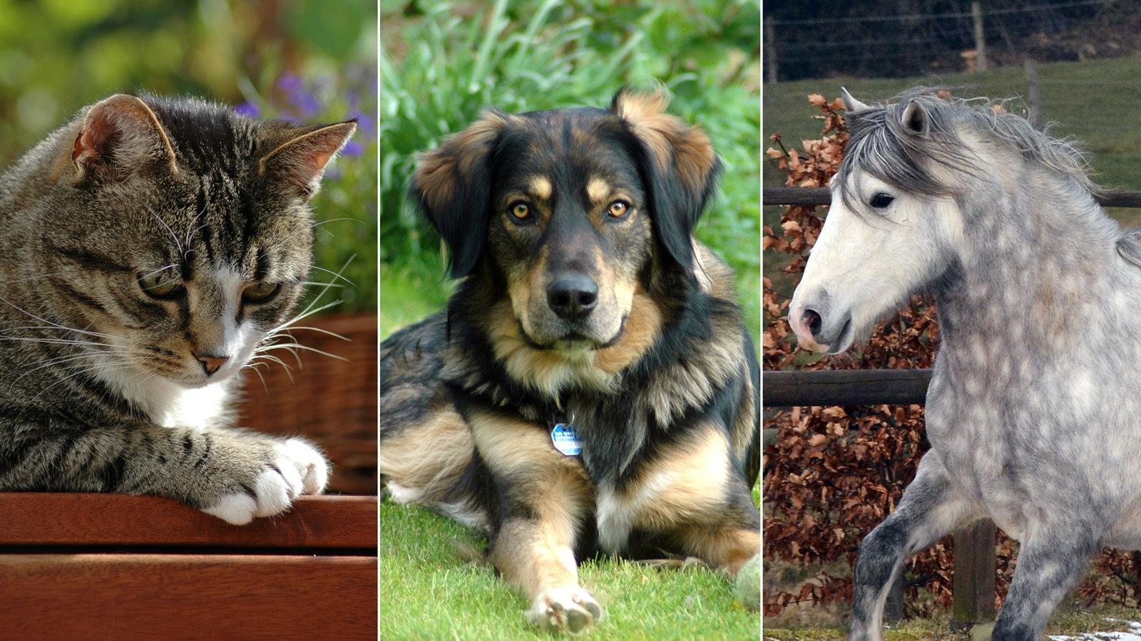 Alle Themenschwerpunkte Tiere Suchen Ein Zuhause Fernsehen Wdr