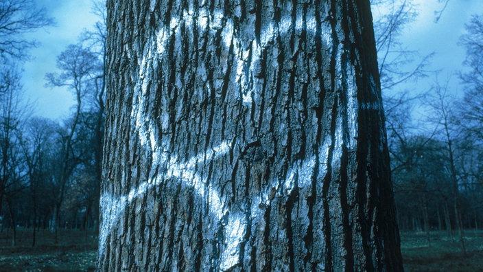 Herz mit Pfeil auf einen Baum gesprüht; Rechte: Mauritius Images