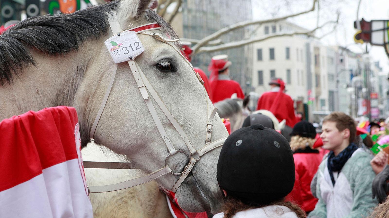 Karneval Pferd