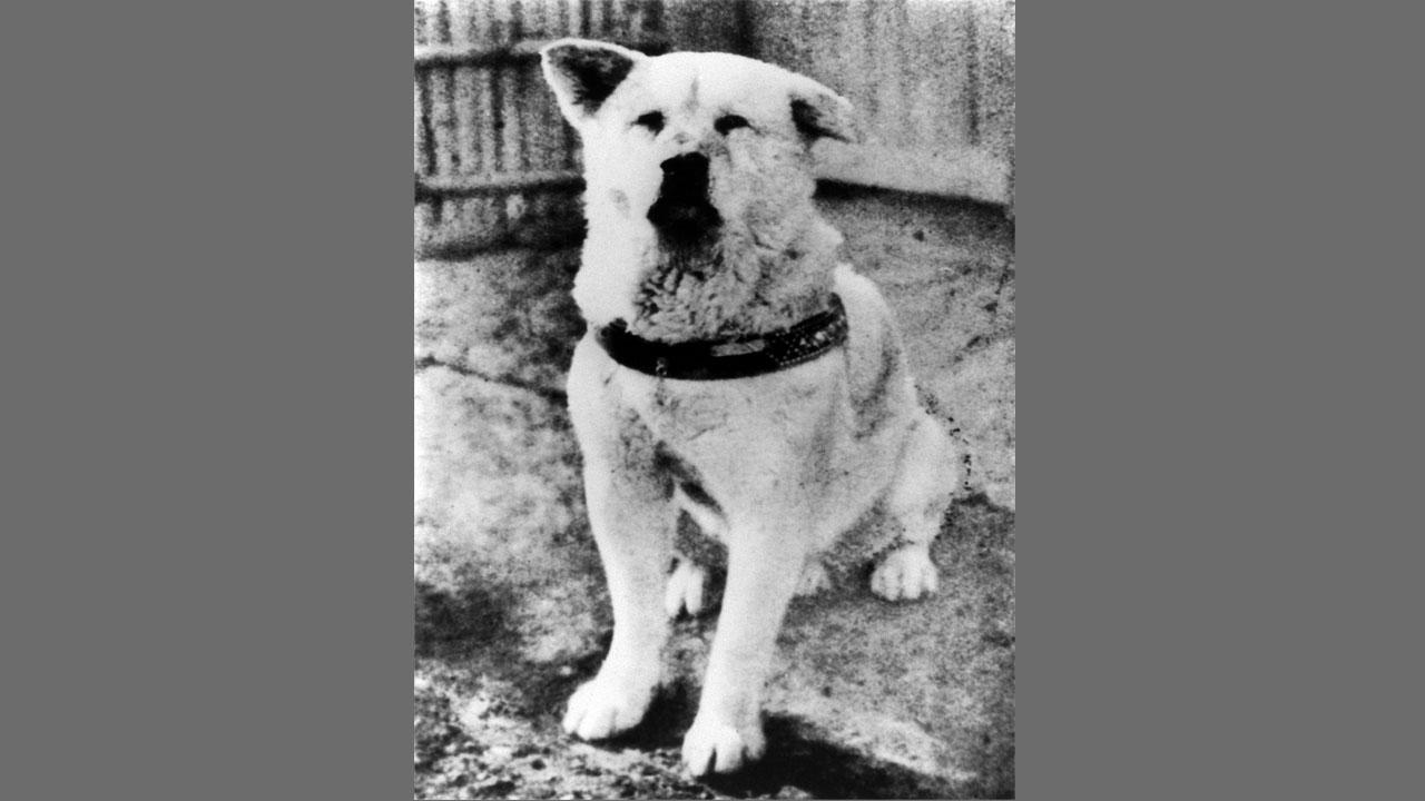 Japanischer Hund Film