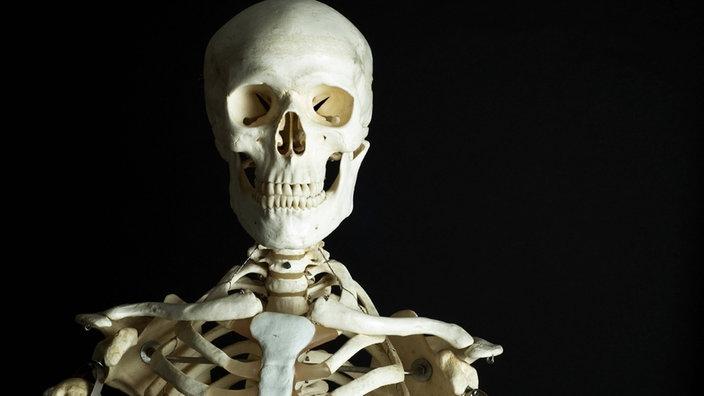 Anatomie des Menschen: Knochenbau - Knochenbau - Natur - Planet Wissen