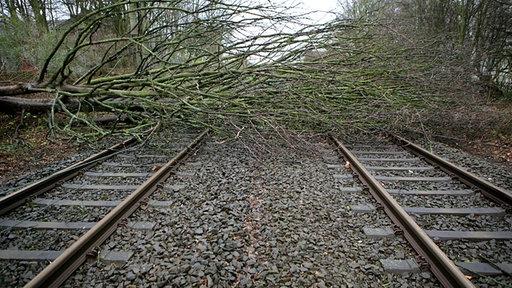 Ein umgestürzter Baum blockiert die Gleise der Bahn bei Essen