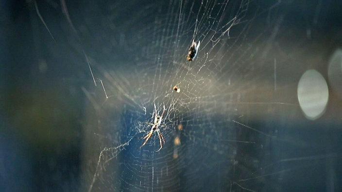 was tun gegen spinnen im haus insekten im haus was ist. Black Bedroom Furniture Sets. Home Design Ideas