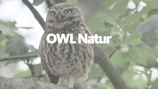 Lokalzeit Owl Mediathek