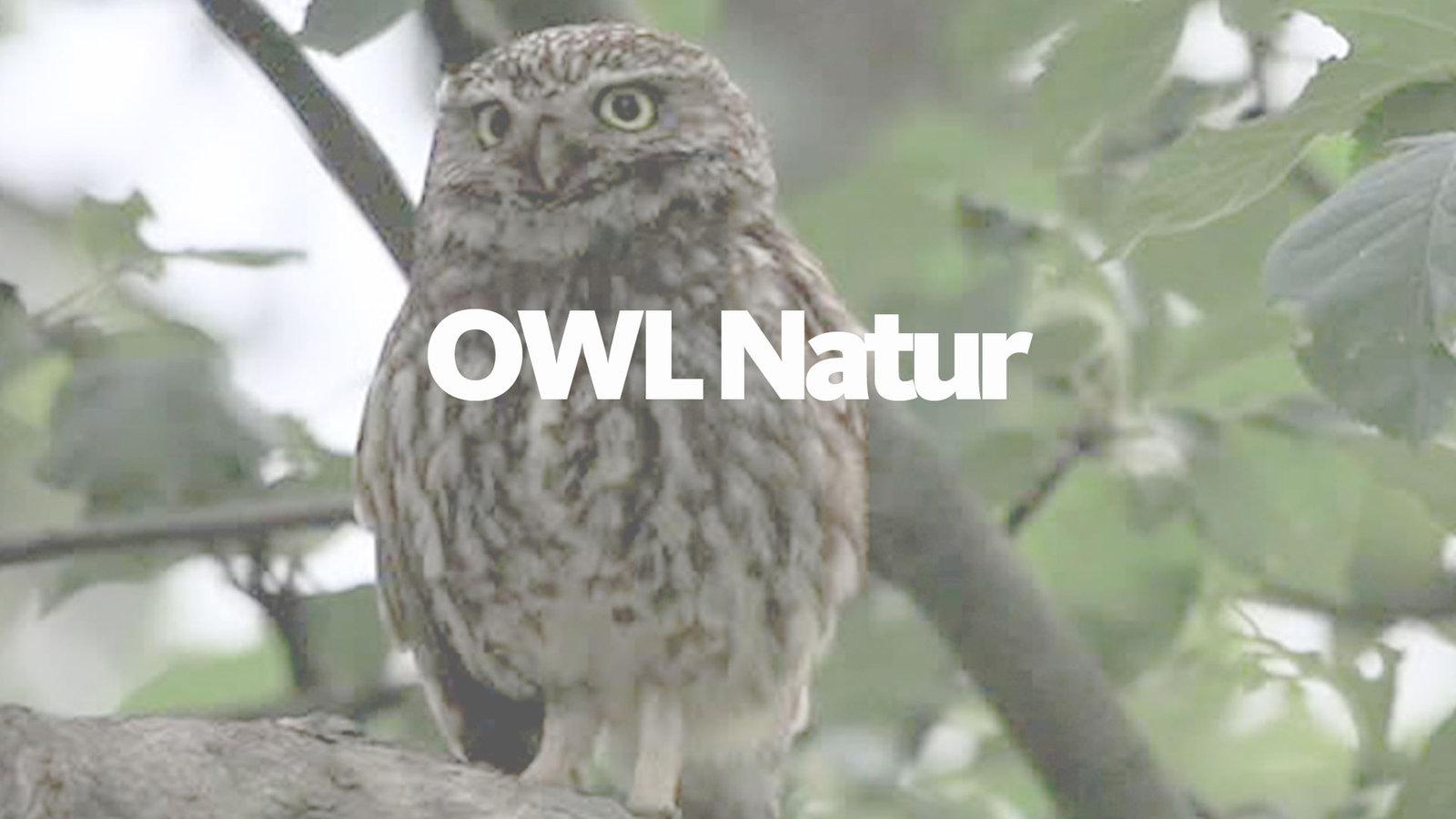 Wdr Owl Mediathek