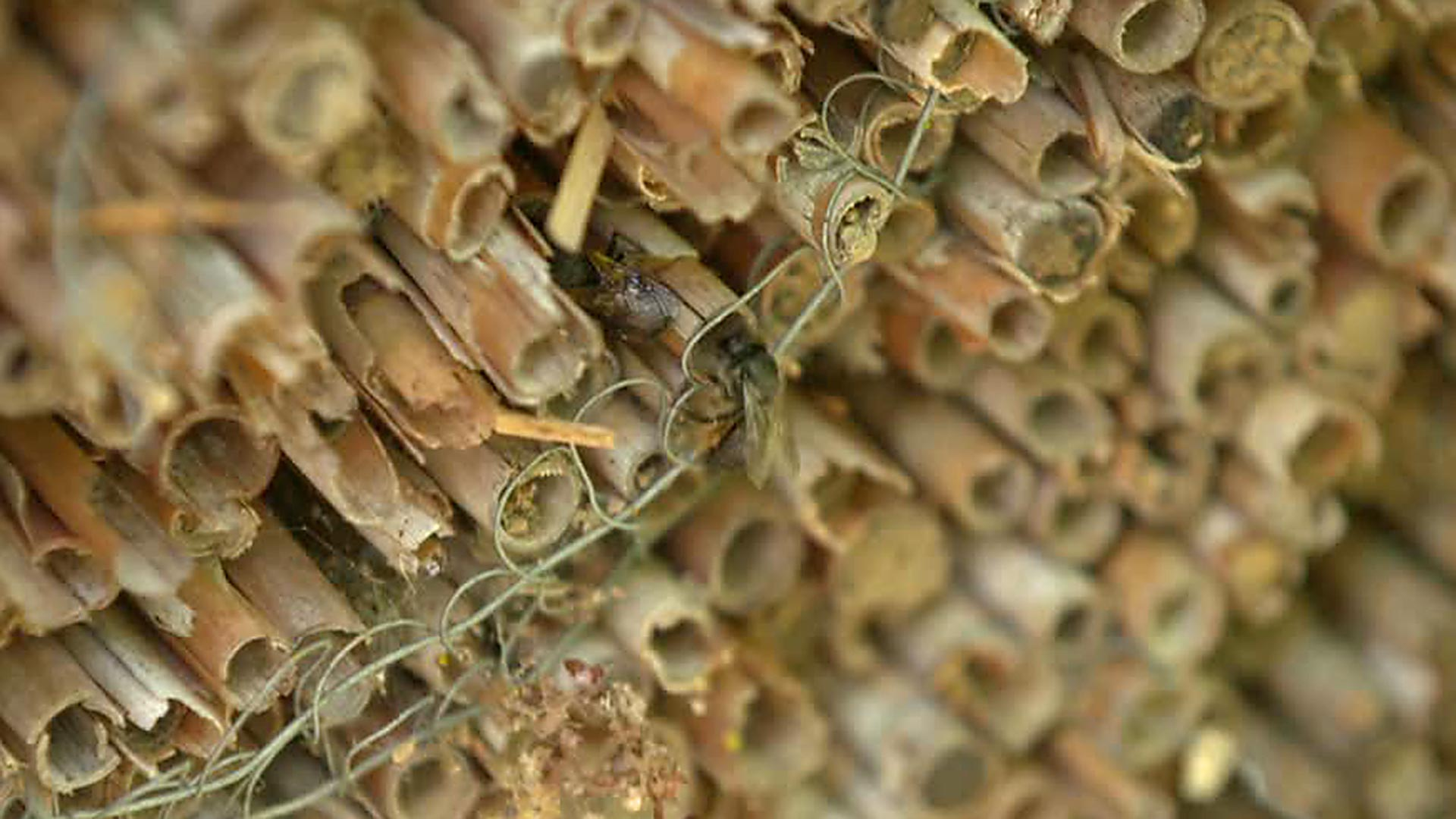 NABU Jahres PK: Guerilla-Gardening soll Insekten retten - Mediathek ...