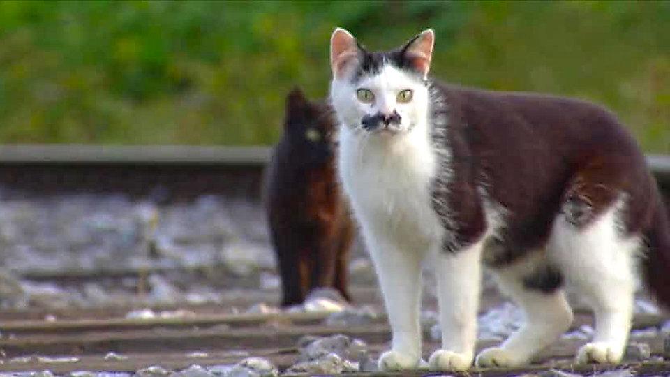 Quarks Und Co Katzen