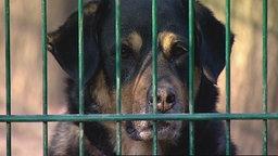 Hund schaut durch Zaun