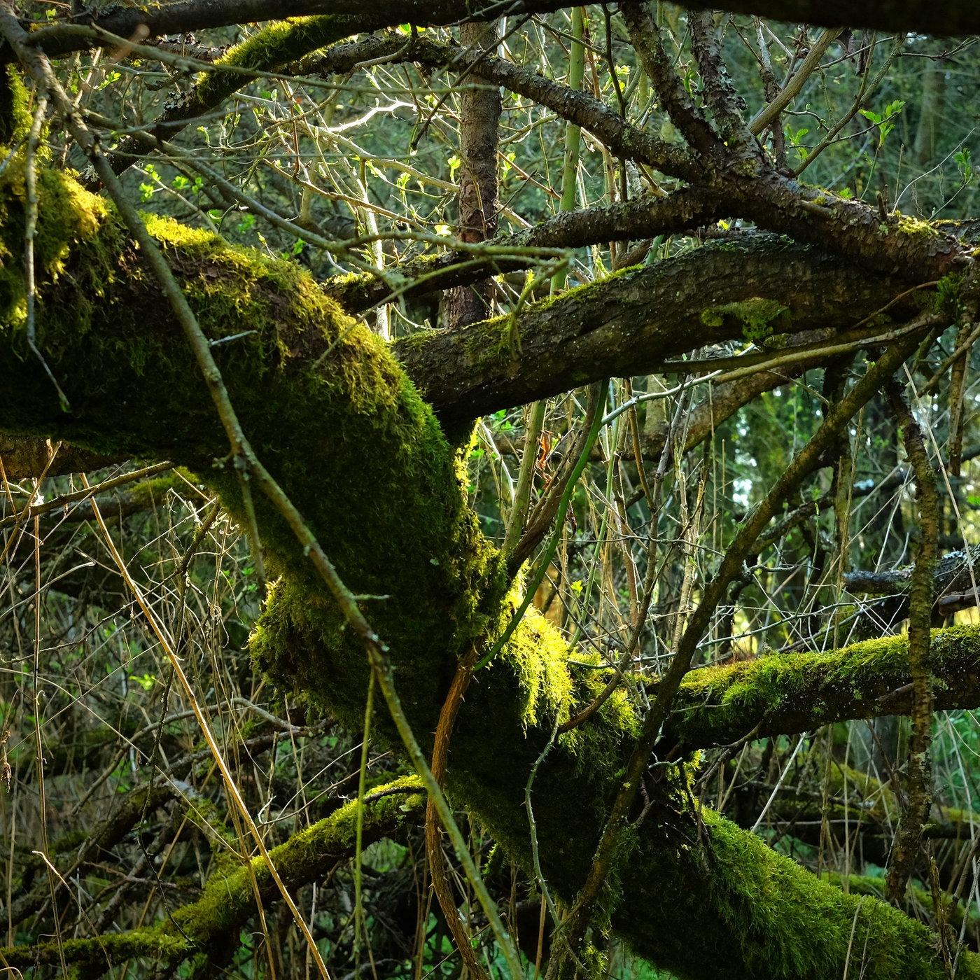 Der Wald - Die Natur schlägt zurück