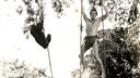 "Filmszene aus ""The new adventures of Tarzan"" mit Hermann Brix (1935)"