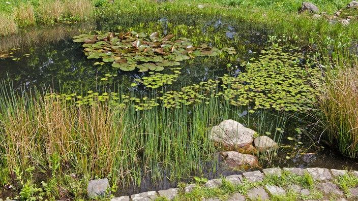 Wdr 4 Drinnen Und Draußen Der Gartenteich Im Frühjahr Wohnen