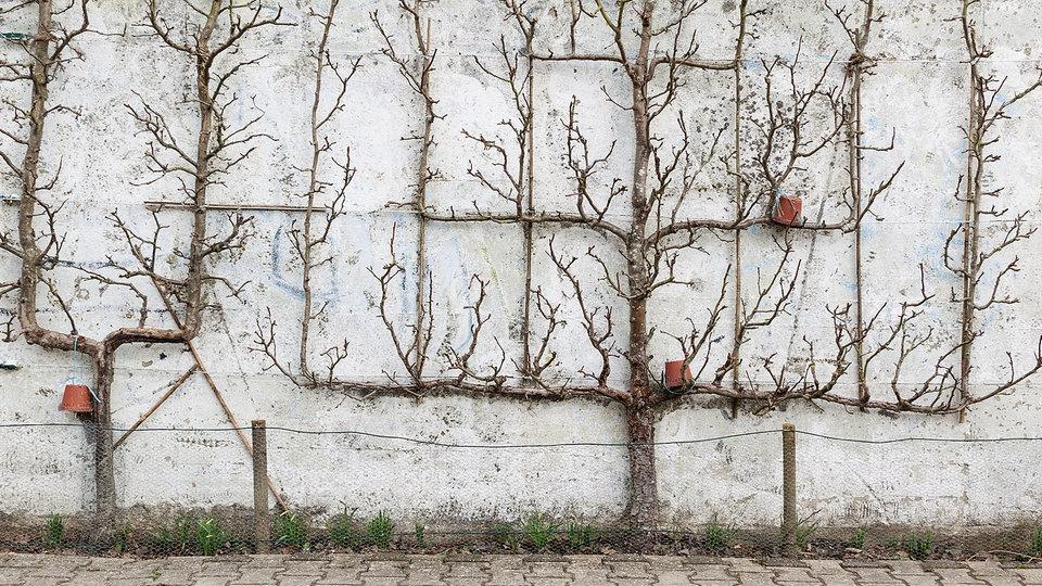 Ungewöhnlich Wasserfall Garten Wand Zeitgenössisch ...