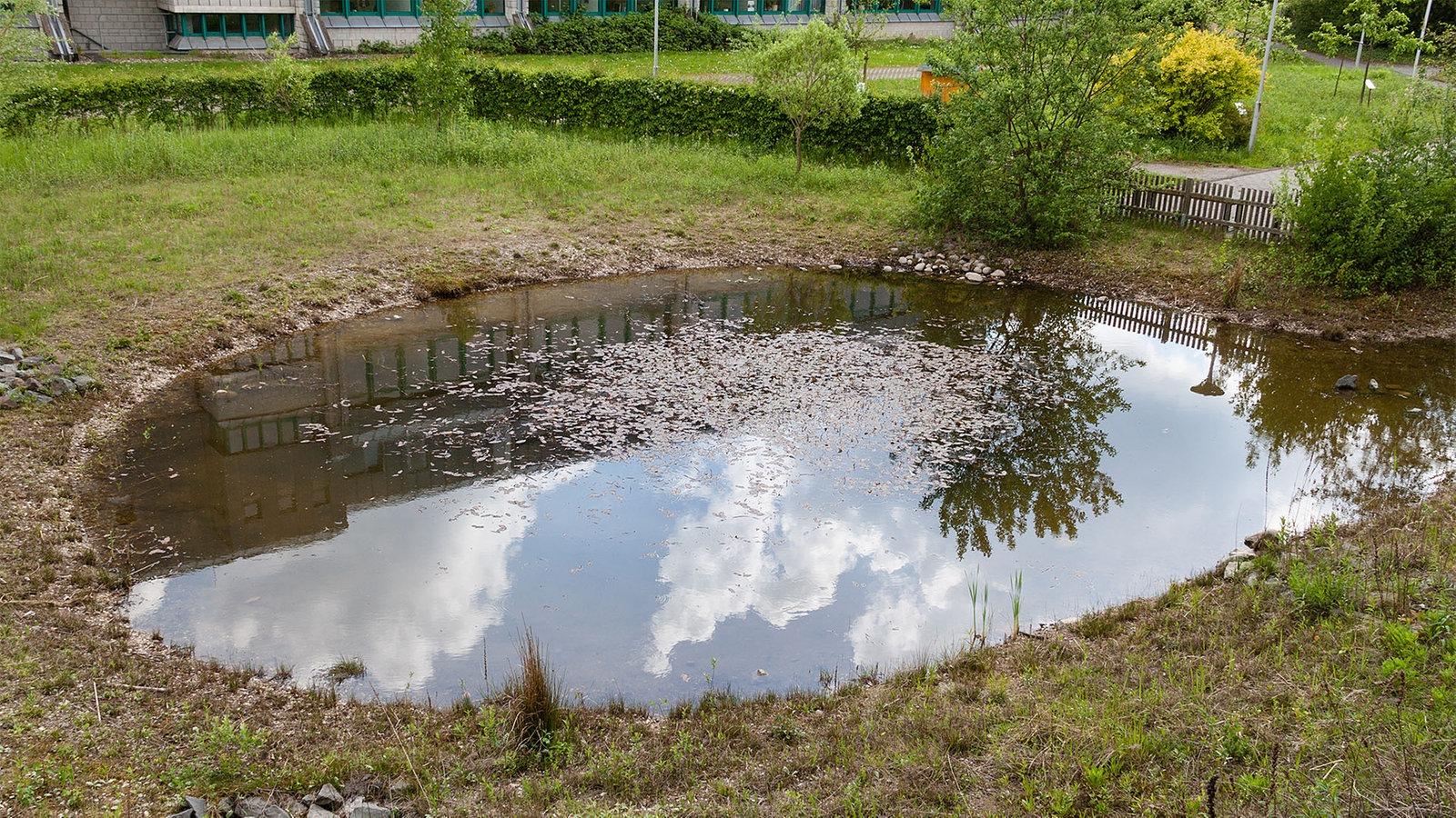 Naturteich wasser voller leben wohnen verbraucher wdr for Fische naturteich