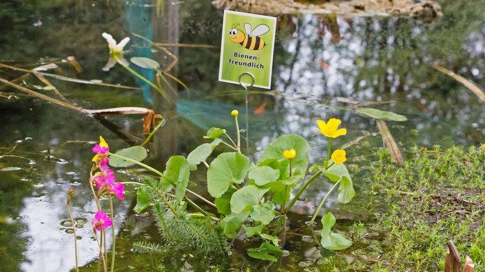 Wdr 4 Drinnen Und Draußen Start In Die Gartenteich Saison Wohnen