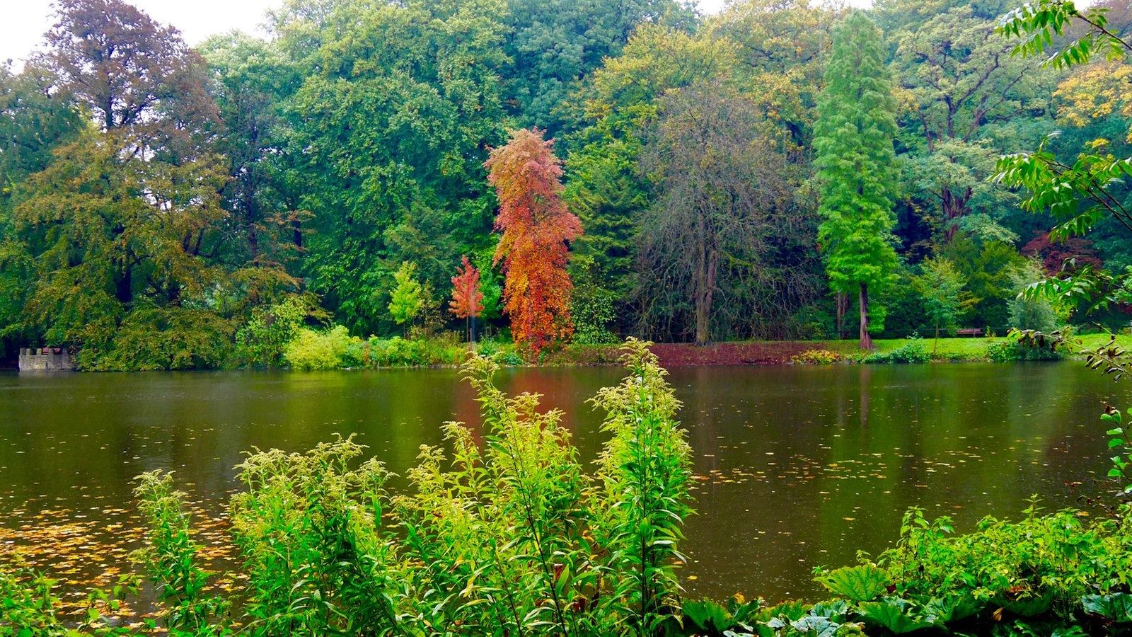 Botanischer garten rombergpark in dortmund spaziergang for Garten 4 bilder 1 wort