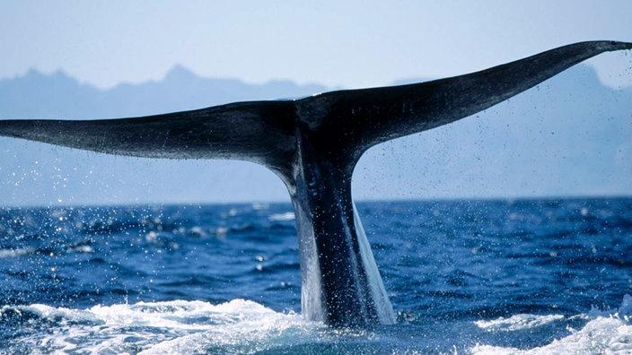 Wale und Delfine: Anpassung ans Meeresleben - Tiere im Wasser ...