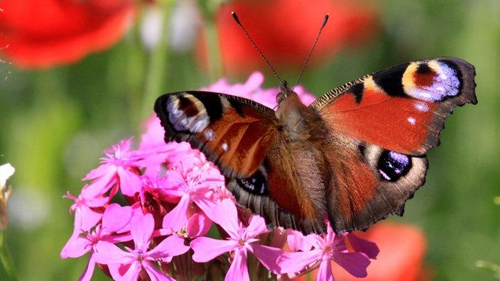 Service Garten - Schmetterlinge in den Garten locken - Wohnen ...