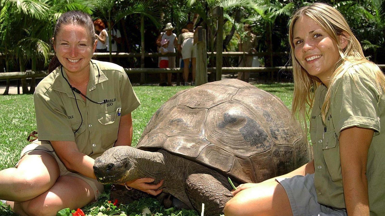 Galapagos Schildkröte Alter
