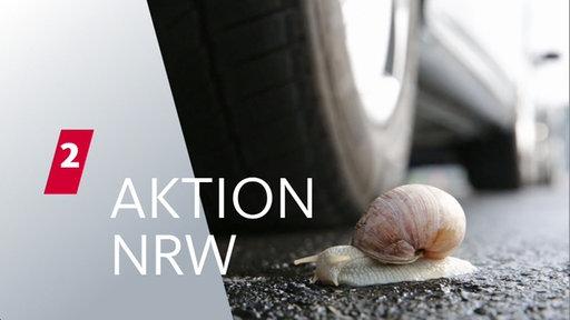 Schnecke auf einer Straße neben einem stehenden Auto