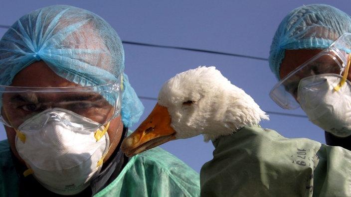 vogelgrippe 10 jahre sp ter die angst vor der gefl gelkrankheit ist vergessen die sorge. Black Bedroom Furniture Sets. Home Design Ideas