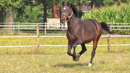 Quarks Pferde