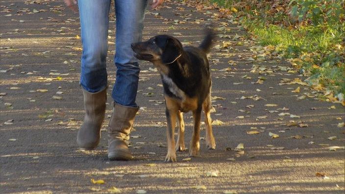 Bildergebnis für hund fuß