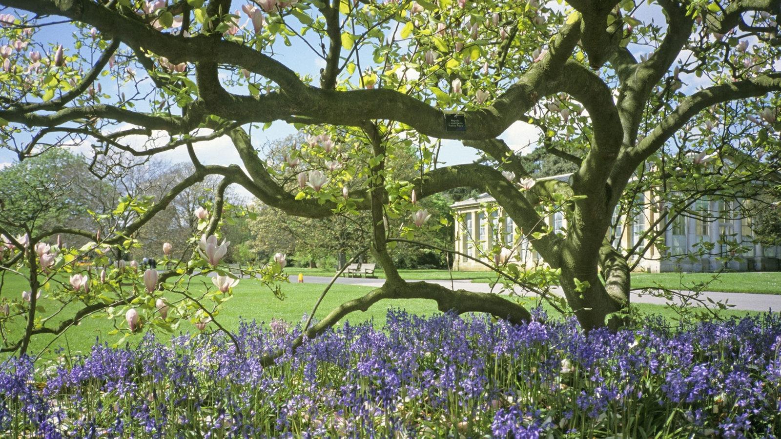 magnolie anbau und pflege freizeit verbraucher wdr. Black Bedroom Furniture Sets. Home Design Ideas