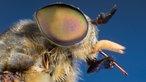 grasmilben bremsen und m cken hilfe gegen insekten. Black Bedroom Furniture Sets. Home Design Ideas