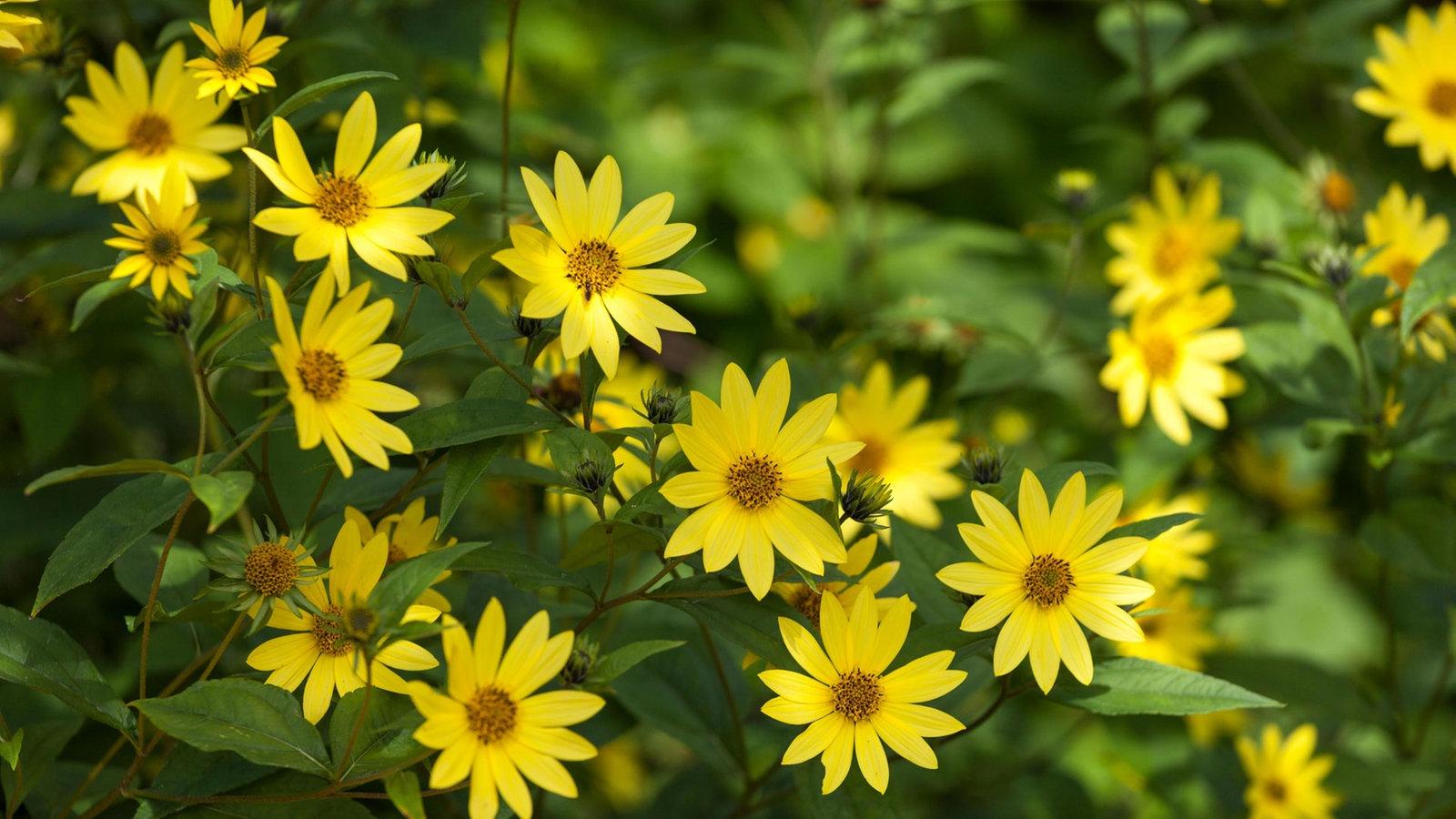 Elegant Malvorlagen sonnenblumen Ausdrucken